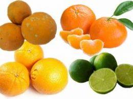 SAÚDE I Nutricionista fala dos mitos e verdades de alimentos que aumentam imunidade