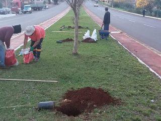 MEIO AMBIENTE I Feito o plantio de mais de 100 mudas de árvores no município